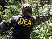 Pot Raids Staged in Emerald Triangle
