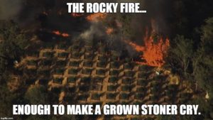 Marijuana grows all over Northern California are being destroyed by raging wildfires, including the Rocky Fire in Lake County, inspiring memes like the one pictured here.