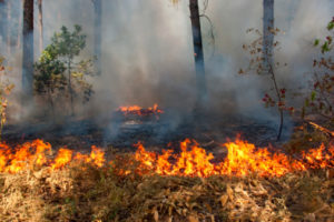 Rocky Fire is burning crops in Lake County.